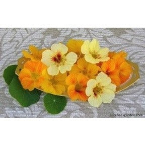 Renee's Garden Mounding Nasturtiums Cup of Sun - Flowers - Rogue Hydro - 3