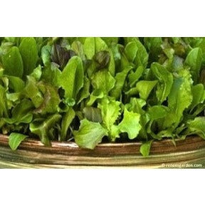 Renee's Garden Cut and Come Again Baby Mesclun Lettuces - Greens - Rogue Hydro - 2