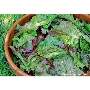 Renee's Garden Heirloom Cutting Mix Lettuce - Greens - Rogue Hydro - 2