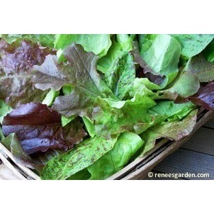 Renee's Garden Heirloom Cutting Mix Lettuce - Greens - Rogue Hydro - 3
