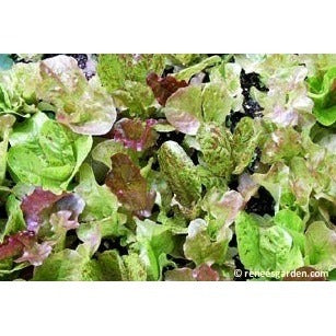 Renee's Garden Heirloom Cutting Mix Lettuce - Greens - Rogue Hydro - 4