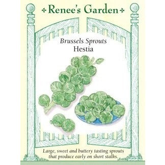 Renee's Garden Hestia Brussel Sprouts - Greens - Rogue Hydro - 1