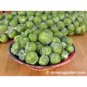 Renee's Garden Hestia Brussel Sprouts - Greens - Rogue Hydro - 2