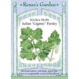 Renee's Garden Kitchen Herbs Italian Gigantic Parsley - Parsley - Rogue Hydro - 1