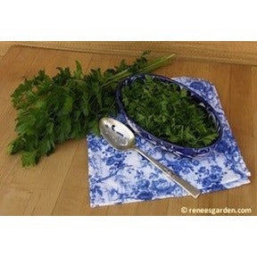 Renee's Garden Kitchen Herbs Italian Gigantic Parsley - Parsley - Rogue Hydro - 3