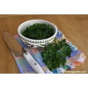 Renee's Garden Kitchen Herbs Italian Gigantic Parsley - Parsley - Rogue Hydro - 5