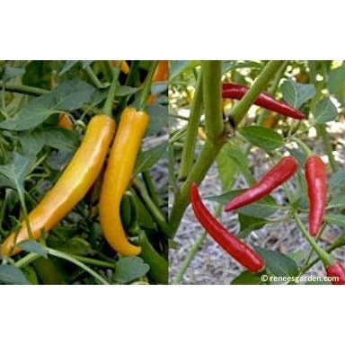 Renee's Garden Peppers - Thai Chile Duo - Peppers - Rogue Hydro - 5
