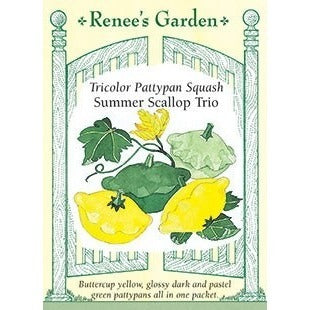Renee's Garden Summer Scallop Trio Bush Squash - Squash - Rogue Hydro - 1
