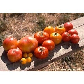 Renee's Garden Heirloom Tomatoes - Rainbow's End - Tomatoes - Rogue Hydro - 3