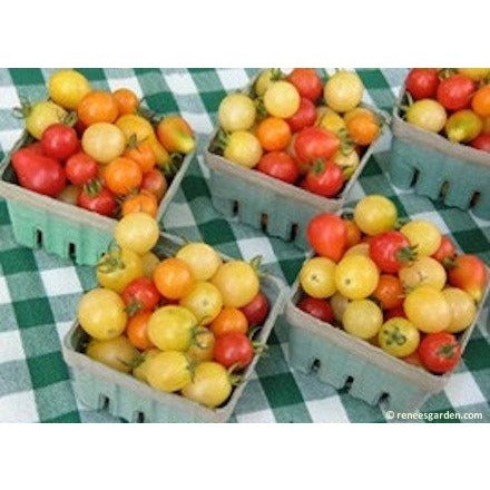 Renee's Garden Tomatoes - Cherry Garden Candy - Tomatoes - Rogue Hydro - 3