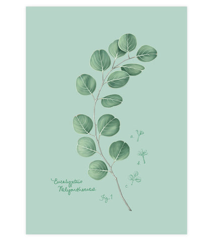 Fig.1 Eucalyptus Art Print
