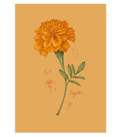 Fig.7 Marigold Art Print