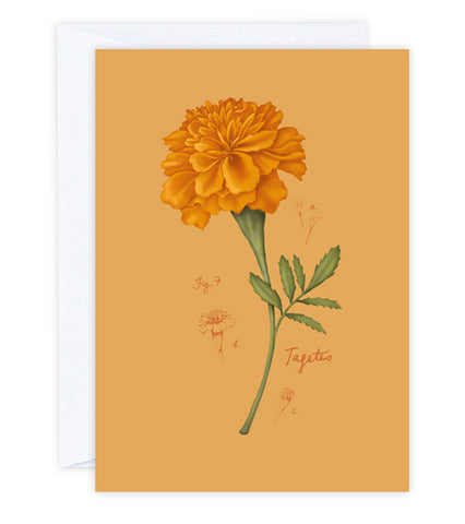 Fig.7 Marigold Greeting Card