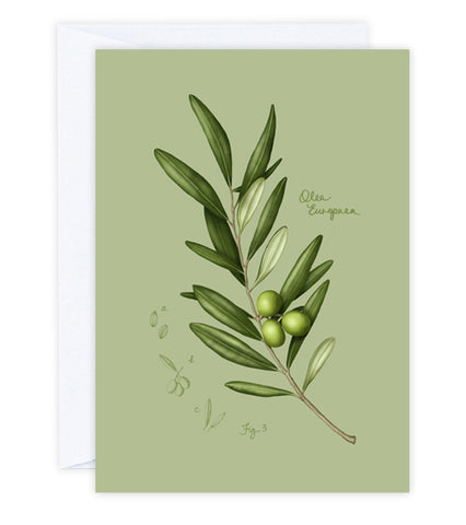 Fig.3 Olive Leaves Greeting Card
