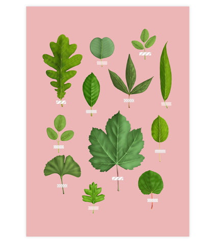 Leaf Collection Art Print