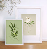 Fig.3 Olive Leaves Art Print