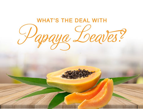 What's the Deal with Papaya Leaves - Herbal Papaya Blog