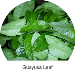Guayusa Leaf Herbal Goodness Super Herb