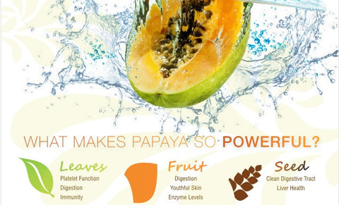 papaya leaf extract herbal goodness