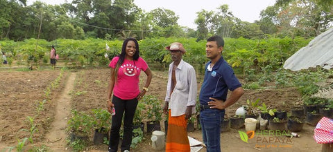 herbal papaya farmers