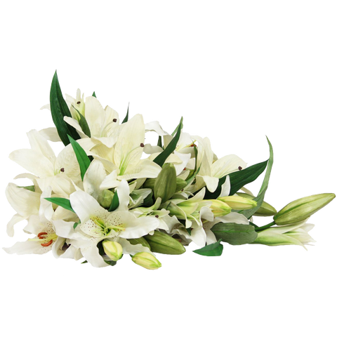 White Lily Bouquet (13 Stems)