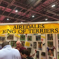 Airedales claim the throne at Discover Dogs - Cairn terrier Collectibles