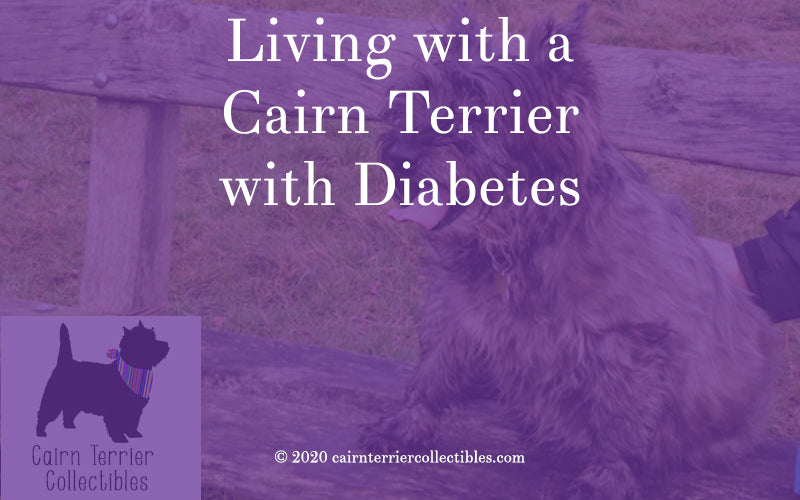 Living with a Cairn Terrier with Diabetes - Cairn Terrier Collectibles