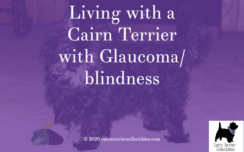 Living with a Cairn Terrier with Glaucoma - Cairn Terrier Collectibles