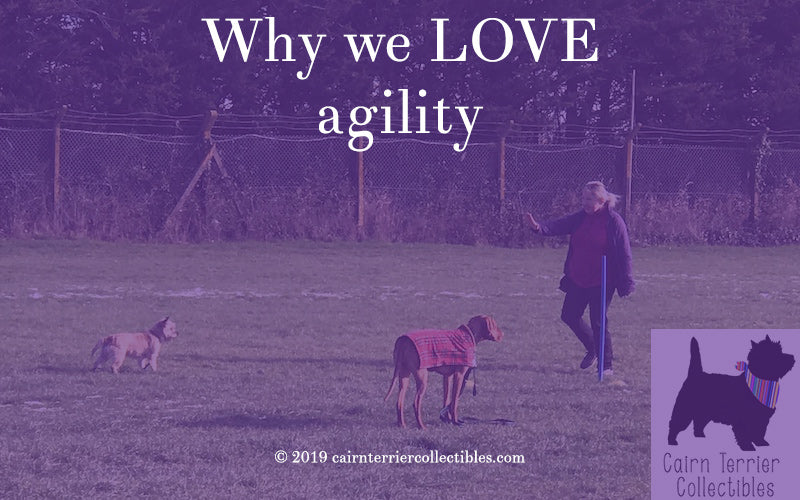 Why we love agility