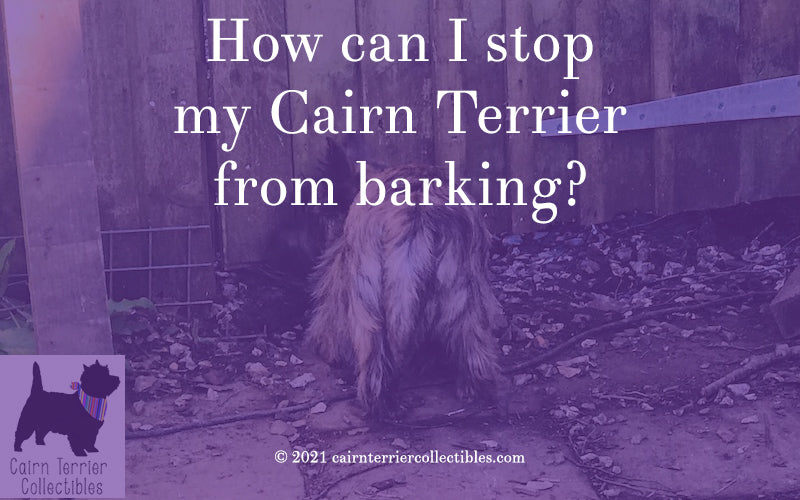 How can I stop my Cairn Terrier from barking - blog from Cairn terrier Collectibles