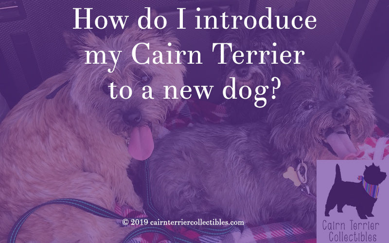 How do I introduce my Cairn Terrier to a new dog?