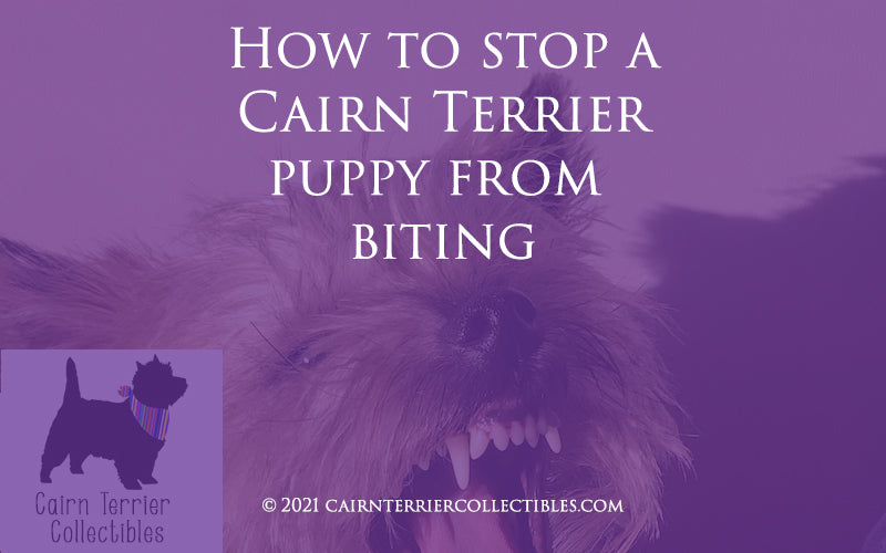 How to stop a Cairn Terrier puppy from biting - Cairn Terrier Collectibles