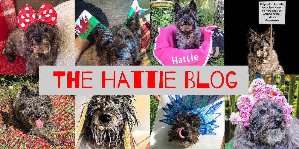 The Hattie Blog - Cairn Terrier Collectibles