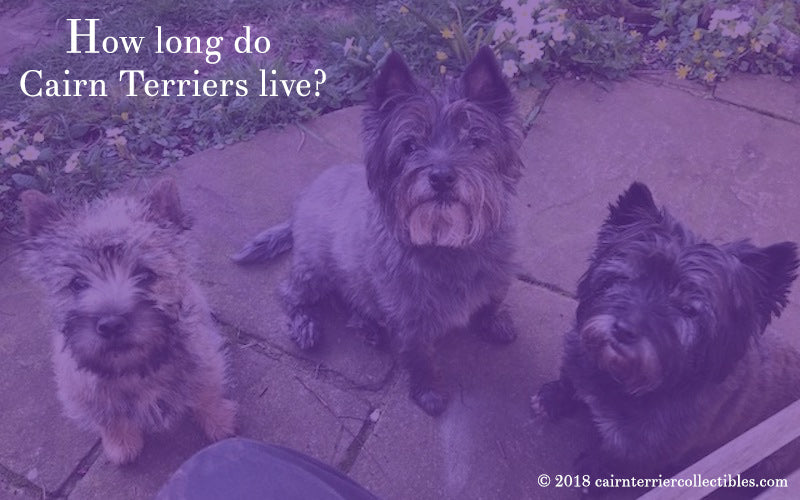 How long do Cairn Terriers live