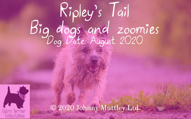 Ripley's Tail - Big Dogs and Zoomies August 2020 - Cairn Terrier Collectibles