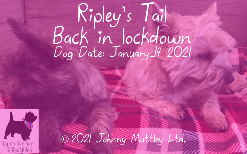 Ripley's Tail - Back in lockdown - Cairn Terrier Collectibles