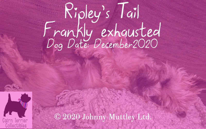 Ripley's Tail Dec 2020 - Frankly exhausted