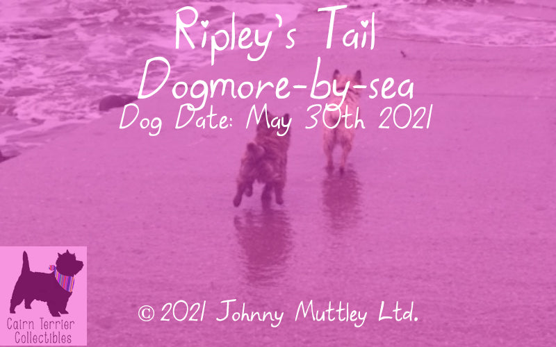 Ripley's Tail May 2021 - Dogmore-by-Sea
