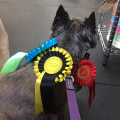 Hattie's Rosettes! Cairn Terrier Collectibles