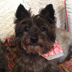 Hattie tries Cairn Terrier Collectibles