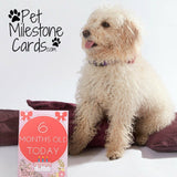 Pet Milestone Cards - Cairn Terrier Collectibles