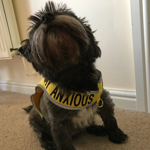 Anxious yellow anxious dog harness (medium)