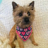 My Funny Valentine Bandana (Dark)  - Slip-on, double layer (Medium) - Cairn Terrier Collectibles