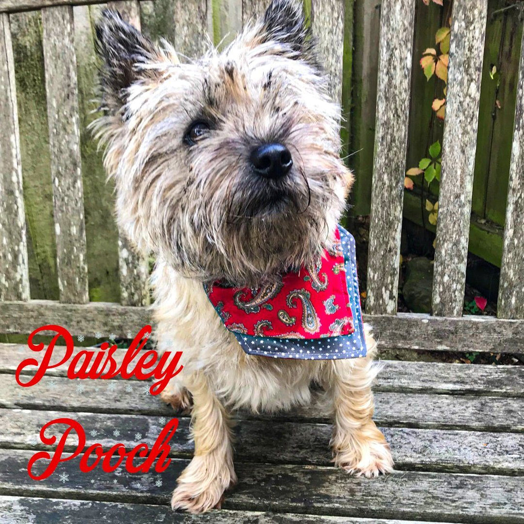 Paisley Pooch Christmas Bandana - Slip-on, double layer (Medium) - Cairn Terrier Collectibles