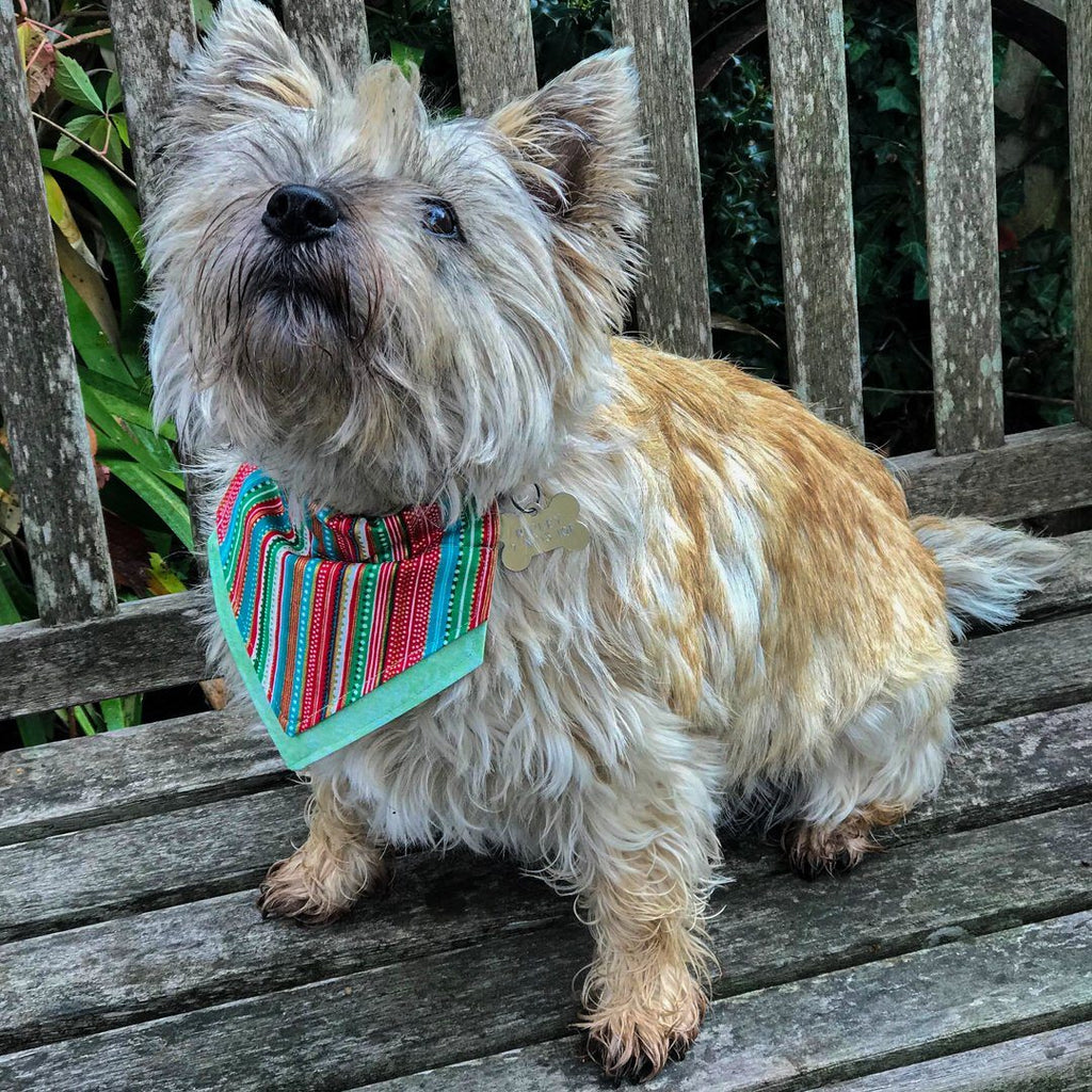 Christmas Wrap Bandana - Slip-on, double layer (Medium) - Cairn Terrier Collectibles