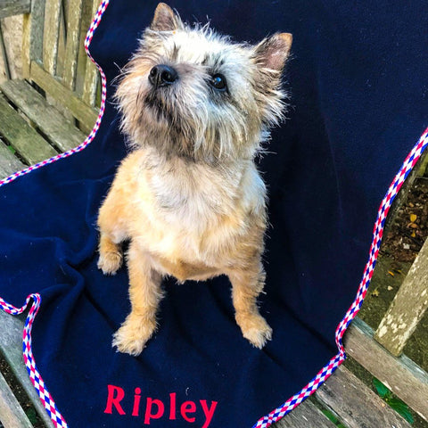 Personalised pet blanket (medium)