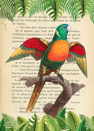 3SL5353 - STEF LAMANCHE - The Blue-Headed Parrot, After Levaillant