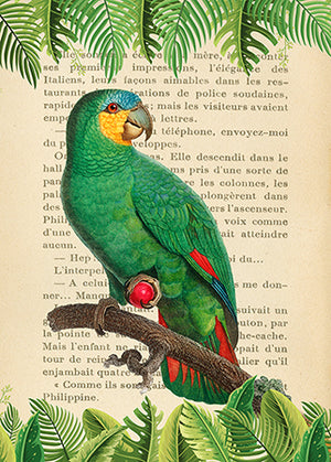 3SL5354 - STEF LAMANCHE - The Orange-Winged Amazon, After Levaillant