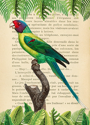 3SL5356 - STEF LAMANCHE - The Plum-Headed Parakeet, After Levaillant