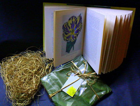 Gift Wrapped - Black, Green, and Yellow -Tea Collection - A Selection Of Rare Teas - Gently Stirred